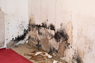 mold damage remediation and prevention in West Virginia, Ohio and Kentucky